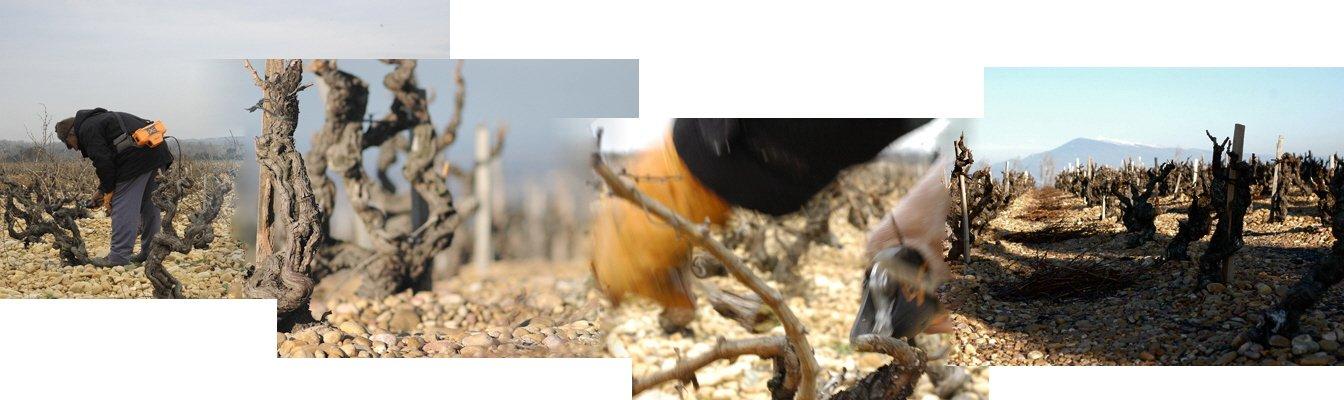 Taille des vignes à Chateauneuf du Pape
