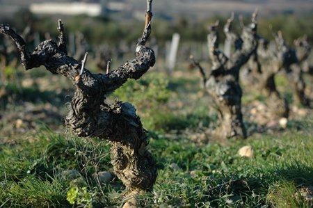 vignoble de chateauneuf du pape