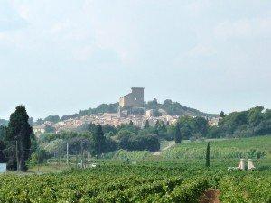 Offres d'emplois saisonniers pour les vendanges 2012 à Châteauneuf du Pape. dans Actu du domaine dans la vigne et dans la cave P1010409-1-300x225